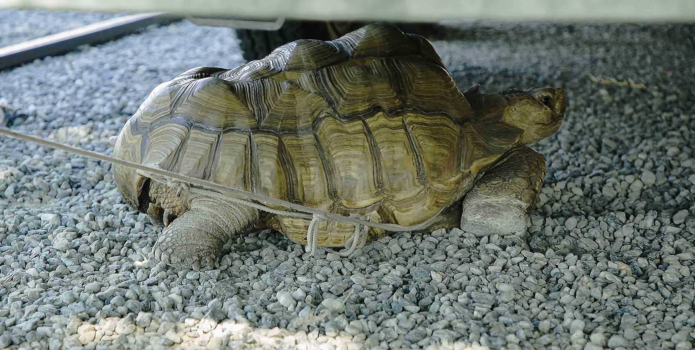 Uga la tartaruga, fotografia di Marcella Ponassi